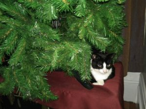 My cat Benedict Cumbercat is loving the Christmas tree. Because she loves it, I kind of don't want to take it down.